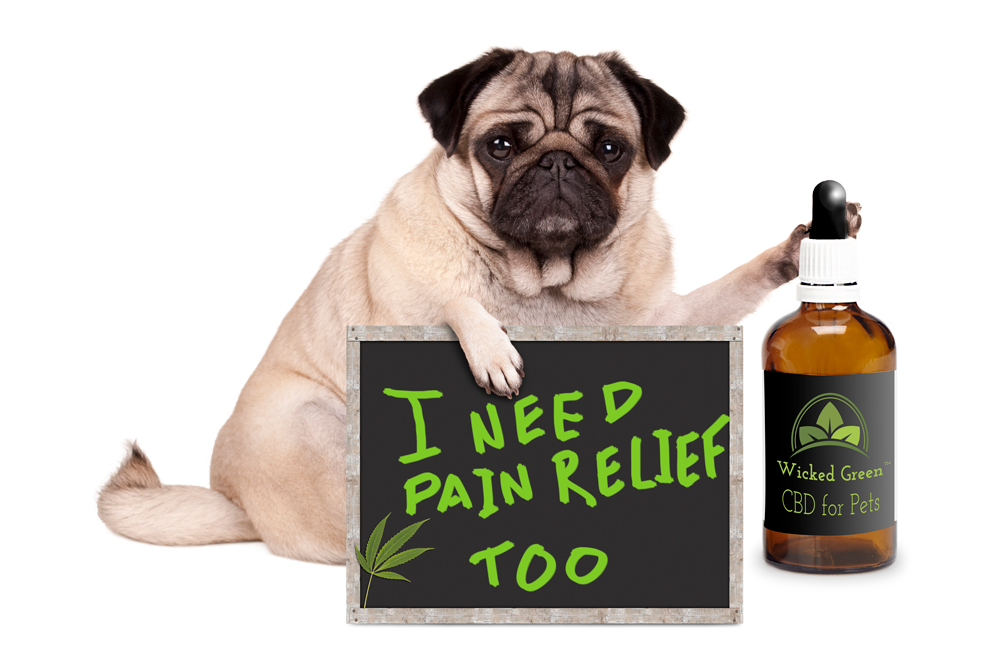I-Need-Pain-Relief-Too-CBD-Dog-WG-Label-