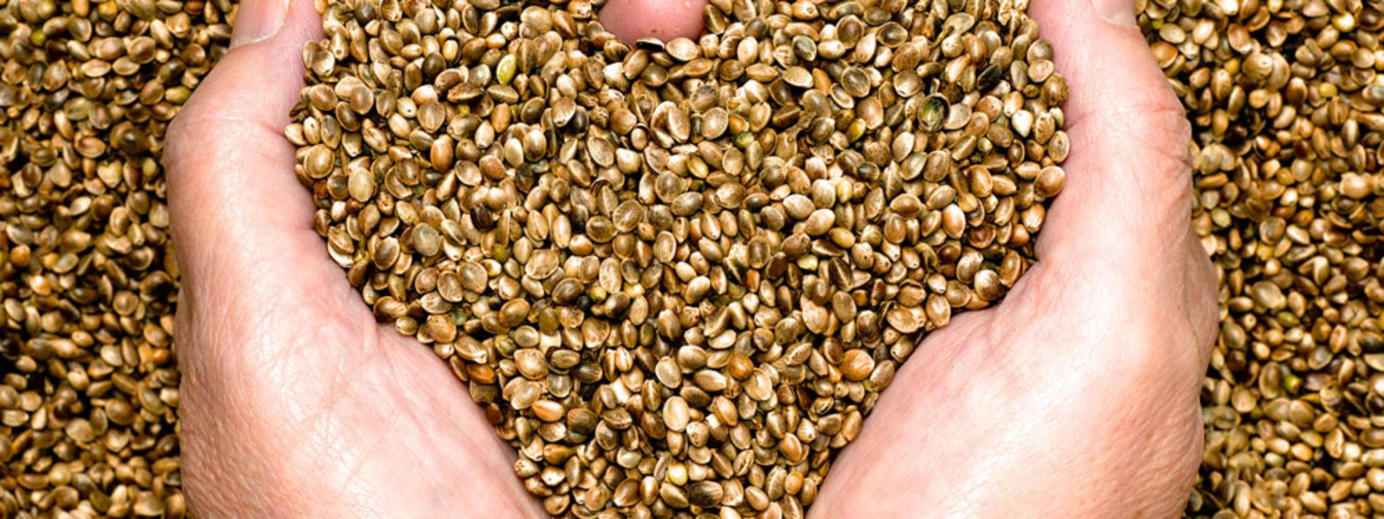 seeds-heart